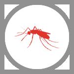 KAONET-icon-insecte