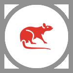 KAONET-icon-rat